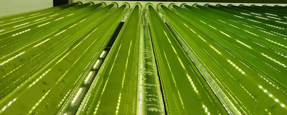 culutre-microalgues-synoxis-algae-filiale