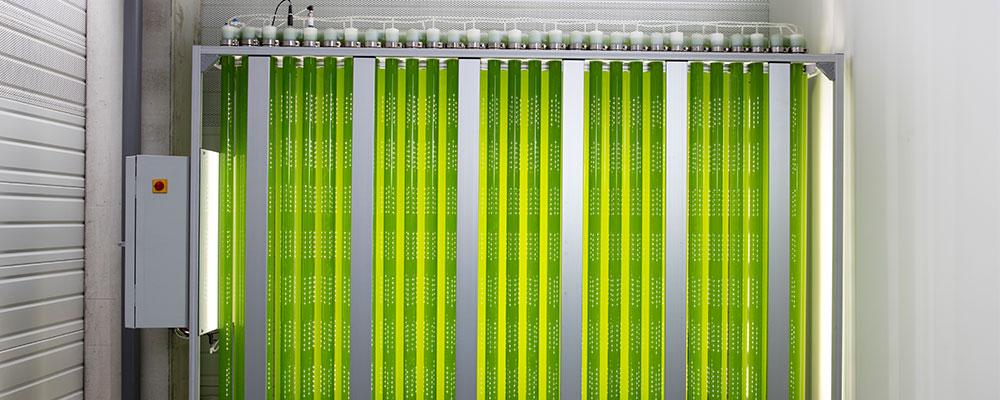 photobioreacteur-jumbo-synoxis-algae-filiale
